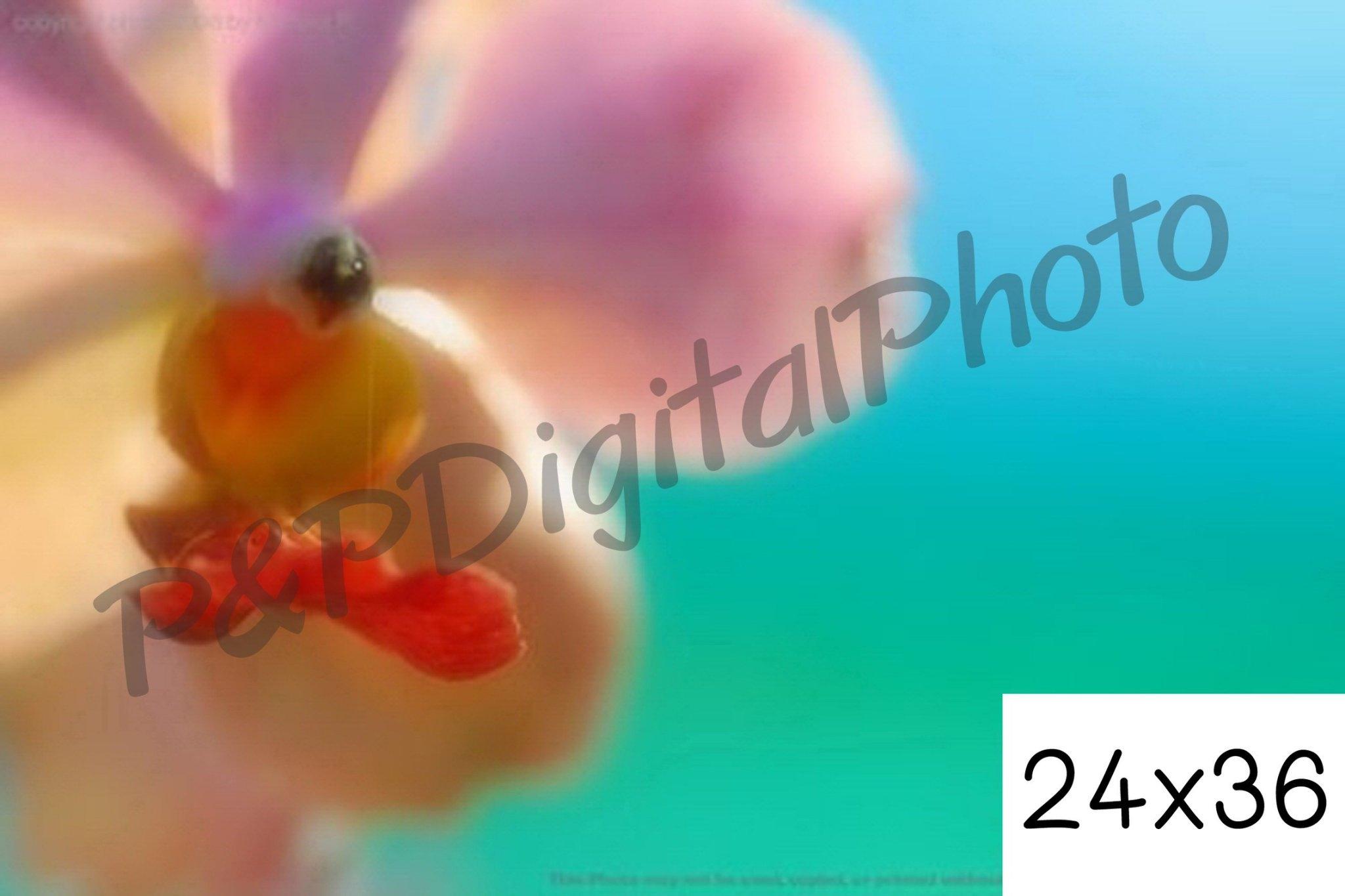 อัดรูปออนไลน์ ล้างรูปราคาถูก ขนาดอัดรูป 24x36