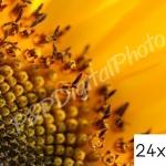 อัดรูปออนไลน์ ล้างรูปราคาถูก ขนาดอัดรูป 24x30