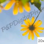 อัดรูปออนไลน์ ล้างรูปราคาถูก ขนาดอัดรูป 20x24