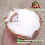 แมวสีขาว นอนหลับในตะกร้าหวาย 12x12 CM [มีเสียง]
