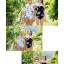 [พร้อมส่ง]ชุดว่ายน้ำ บิกินี่ วันพีช สีดำเกาะอก ลายน่ารักๆ thumbnail 3