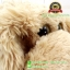 ตุ๊กตาหมา Lying Dog ตัวอ่อน ขนเปียกนุ่ม 15 นิ้ว [Anee Park] thumbnail 3