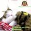 ตุ๊กตาแมวเหมือนจริงนอนหลับ สีเหลืองดำ 14x17 CM thumbnail 8