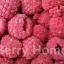 ราสเบอร์รี่แช่แข็ง / Raspberry (1 กก.)