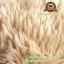 ตุ๊กตา หมีขนเปียก 19 นิ้ว [Anee Park] / 690.- thumbnail 4